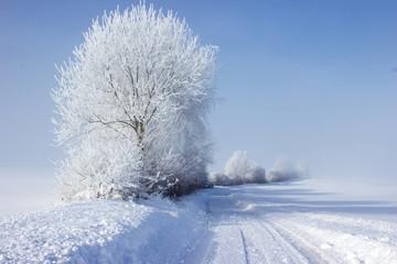 Winter Fotoväggar