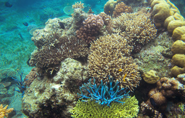 Underwater landscape with colorful corals. Coral undersea photo