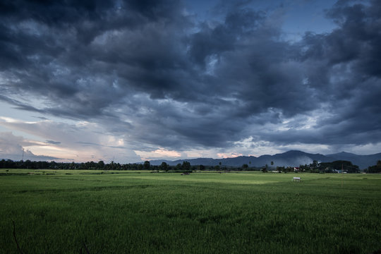 Dark stormy clouds over rice field.