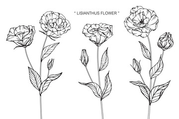 Lisianthus flower drawing