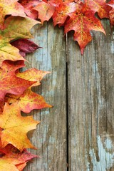 Autumn fall Maple leaves border on rustic blue wooden background with copy space, selective focus