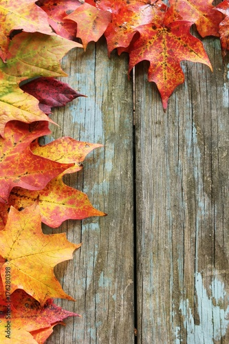 Autumn Fall Maple Leaves Border On Rustic Blue Wooden Background With Copy Space Selective Focus