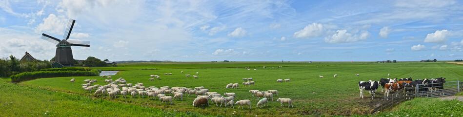 Panorama Windmühle Noord-Holland