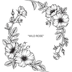 Wild rose flower drawing.
