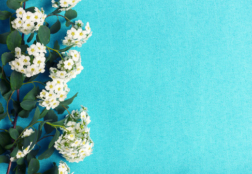 White flowers branch on blue