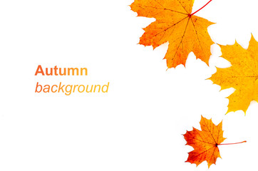 Autumn background with yellow and