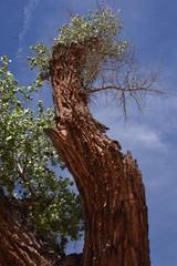 Tree in Desert Against Blue Sky