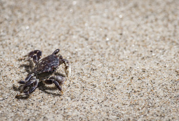 Small crab on sandy beach