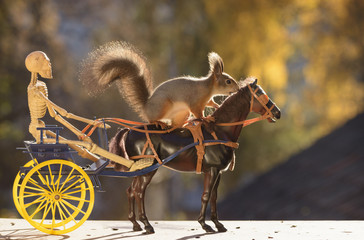 squirrel on horse with skeleton  and coach