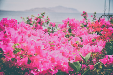 beautiful dense flowers on a background of red sea