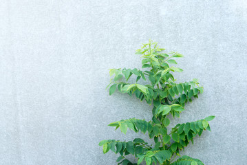 tree on concrete wall background