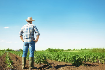 Farmer standing in field with green plants Wall mural