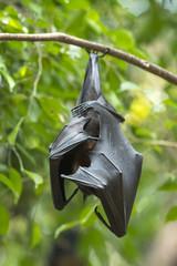 Bat hanging upside down on tree branch