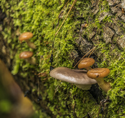 Poisonous mushroom on old trunk of fallen tree