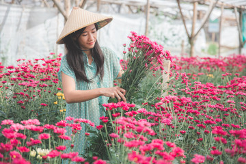 young asian woman harvesting chamomile flowers