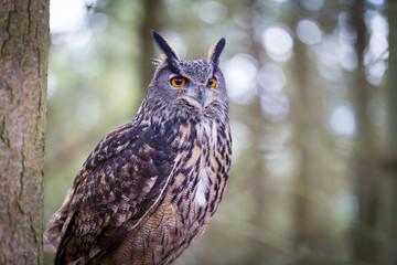 Foto auf Gartenposter Eulen cartoon Eurasian Eagle Owl