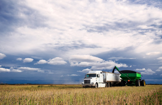 A tractor and grain cart unloading canola seed into a semi truck and trailer in a harvested field under blue cloudy sky in a autumn countryside landscape