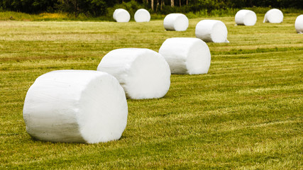Bale of hay wrapped in plastic foil