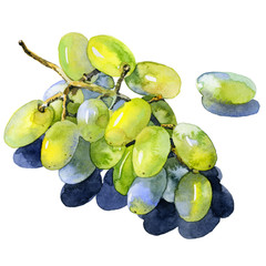 Green, purple, tasty, healthy grapes. Southern, ripe, fresh, wine berry. A bunch of delicious, juicy grapes. Decorative, wild bunch of berries. Watercolor. Illustration