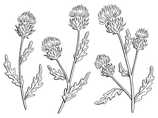 Thistle flower graphic black white isolated sketch illustration vector