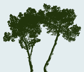 Silhouettes of two pine trees