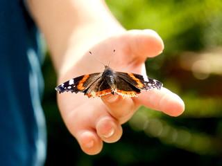 Schmetterling auf Kinderhand