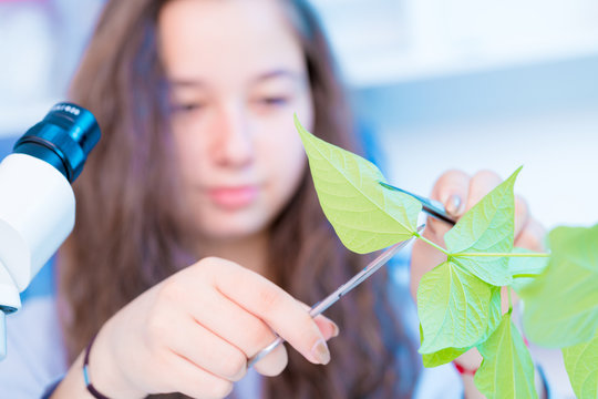 schoolgirl in a class of biology is studying a green plant