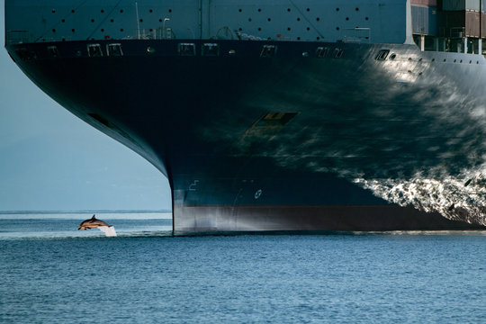 dolphin jumping over ship prow