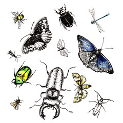 Endangered Insects