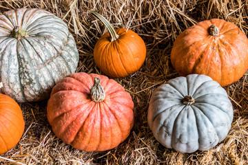 autumn harvest pumpkins and gords