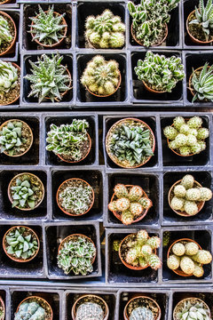 succulants for sale