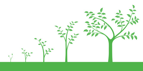Vector illustration of a set of green icons - plant or five growth phase, isolated