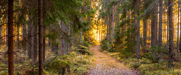 Autumn in Finland, lake and forest, sunset, nature photography. Travel.