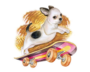 A chihuahua dog on a skateboard. Puppy isolated on white background. Watercolor. Illustration