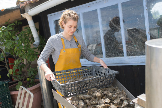 Woman with basket of oysters