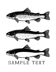 trout; fish;