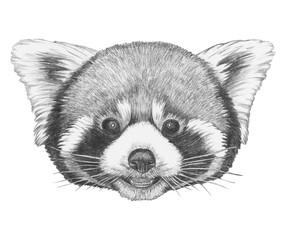 Portrait of Red Panda. Hand-drawn illustration.