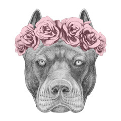 Portrait of Pit Bull with floral head wreath. Hand-drawn illustration.