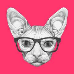 Portrait of Sphynx Cat with glasses. Hand-drawn illustration.
