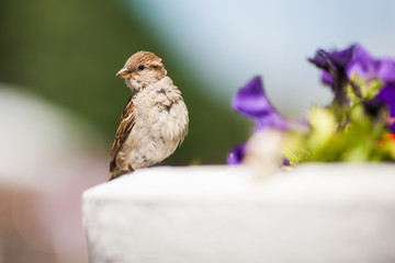 beautiful photo of a sparrow on a colored background