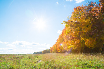Bright beautiful autumn landscape with sun in the sky