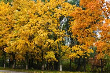 Collection of beautiful colorful autumn leaves green yellow orange red