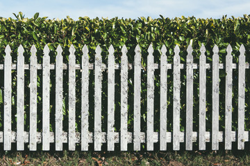 Wood fence in front of  laurel hedge
