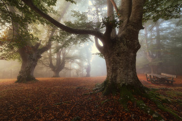 Picnic area in a foggy forest in autumn