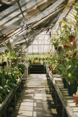 Bright light-filled greenhouse conservatory filled with plants and succulents in terra cotta pots