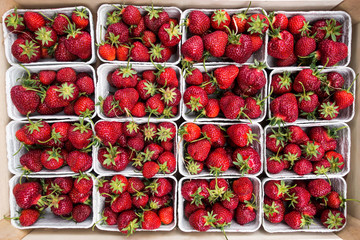 Fresh Strawberrys