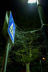 spiders and web at traffic sign