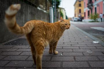 street cat in Sirmione
