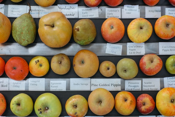 Organic Heirloom apple varieties at horticulture show