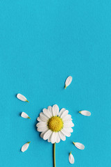 Daisy on a blue background